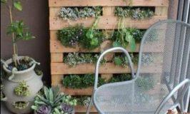Photo du jour: fabriquer un mur végétal à partir d'une palette