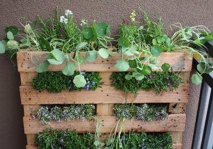 palette jardin vertical - Comment Faire Un Jardin Vertical