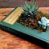 La photo du jour: une plante dans un livre