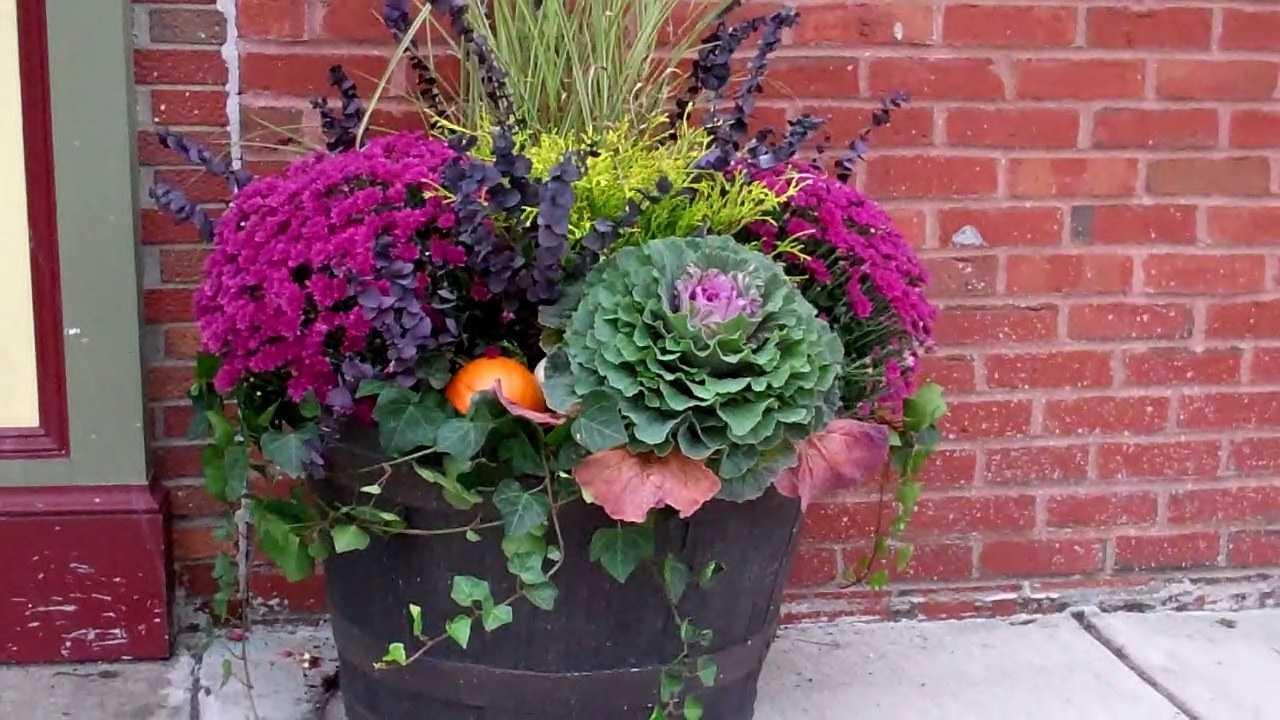 Choux frisé jardinière automne