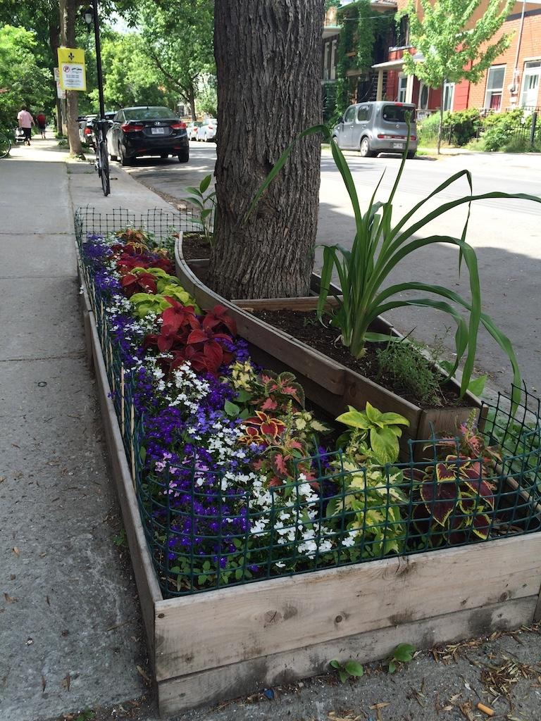 Verdissement bac à fleur trottoir