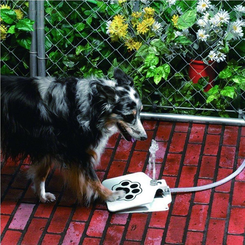 fontaine à eau pour chien à pédale. L'eau jaillit directement du tuyau lorsque le chien appuie sur la pédale
