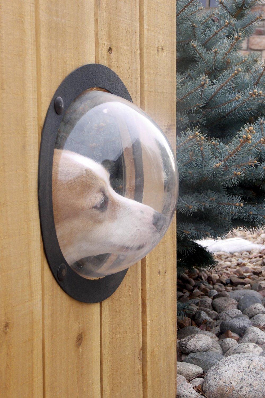 hublot de jardin pour chien pour qu'il puisse regarder en dehors de la clôture