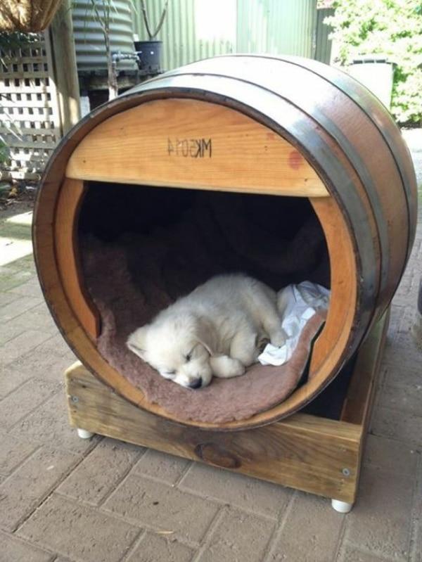 3 am nagements g niaux pour votre chien au jardin d conome. Black Bedroom Furniture Sets. Home Design Ideas