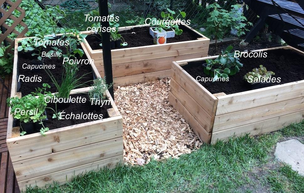 Où planter tomates, poivrons, courgettes, brocoli et fines herbes dans un potager en carré surélevé