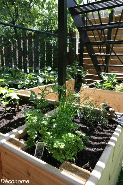 bac de fines herbes dans un potager en carré surélevé / raised bed vegetable garden plantation