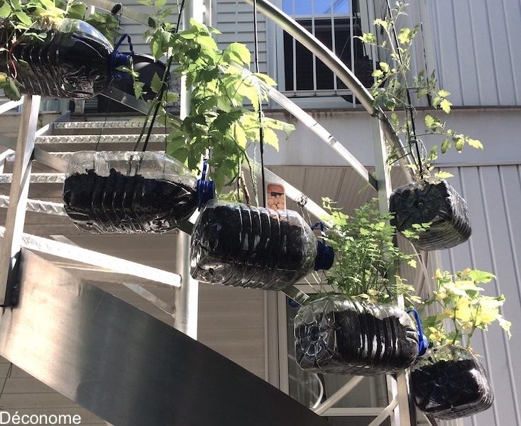 Potager dans bouteilles d'eau suspendues à un escalier / Staircase vegetable garden in water bottles